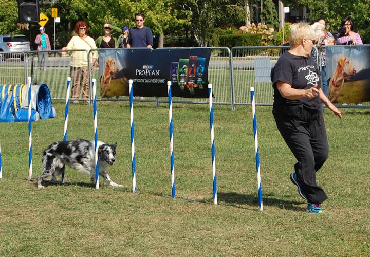 people, competition, fun, exercise, dog, sport, recreation, motion, event, grass, athlete, active, friendship, race, mammal, game, ball, agility, jump, man