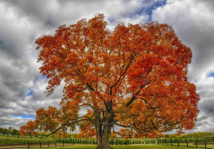 fall, tree, leaf, landscape, no person, park, nature, outdoors, season, bright, wood, fair weather, maple, scene, sky, environment, rural, scenic, countryside, branch