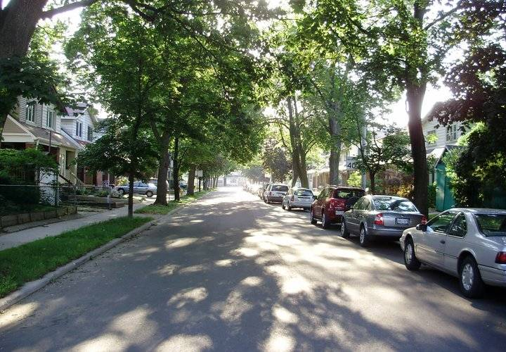 Looking east down milverton boulevard  a residential road in east danforth