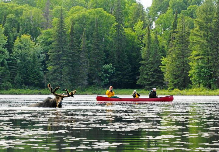 water, river, canoe, lake, paddle, kayak, oar, boat, nature, wood, recreation, sport, tree, summer, outdoors, adventure, raft, travel, leisure, action