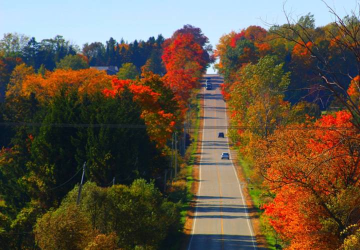 fall, tree, leaf, no person, nature, wood, outdoors, road, landscape, park, maple, guidance, scenic, lush, season, travel, daylight, perspective, bright, lane