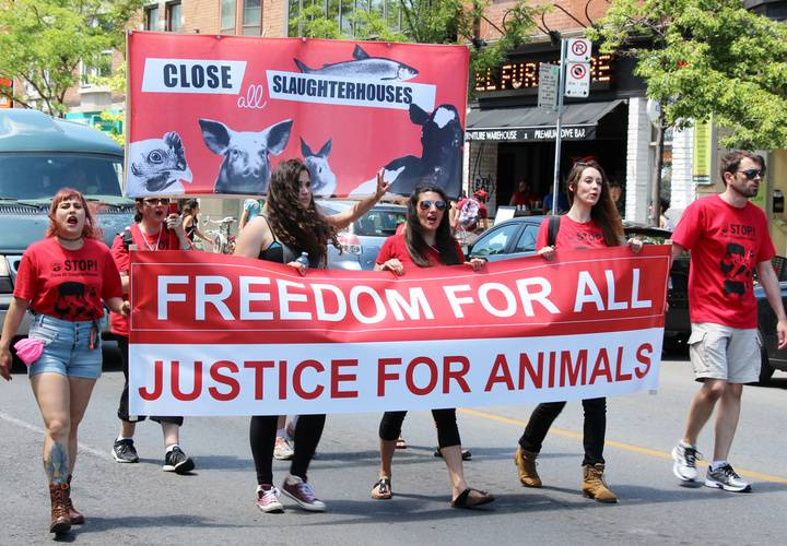 Protestors march with sign demanding justice for animals.