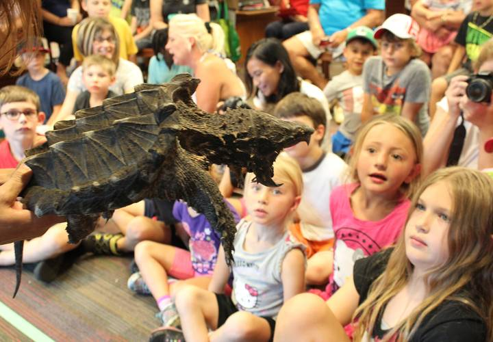 Earle the alligator snapping turtle looks hungry!