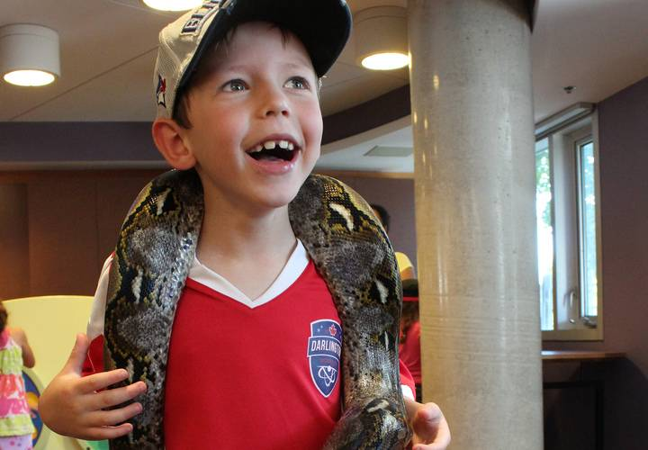 Ginger the dwarf reticulated python made a new friend!