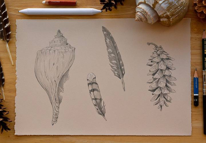 Pine cones  shells  feathers