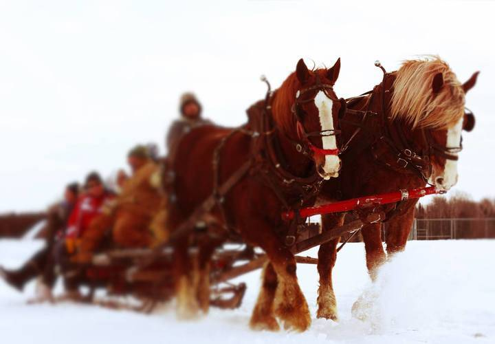 Horse Drawn Sleigh Rides in Ennismore