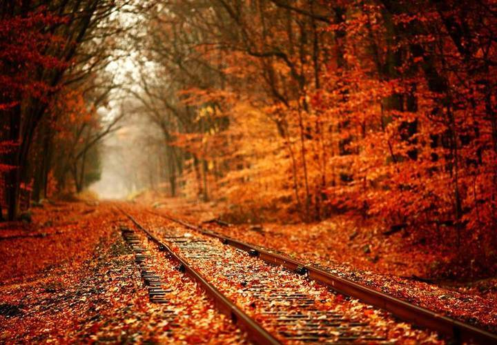 Fall colours train ride