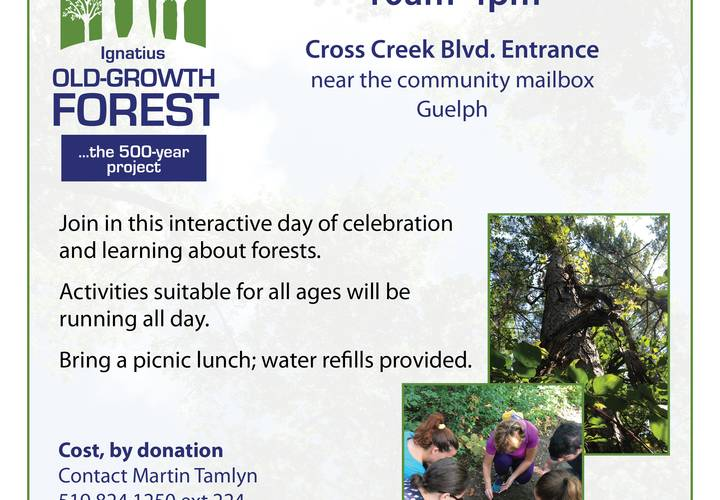 All about forests   sept 23 2018