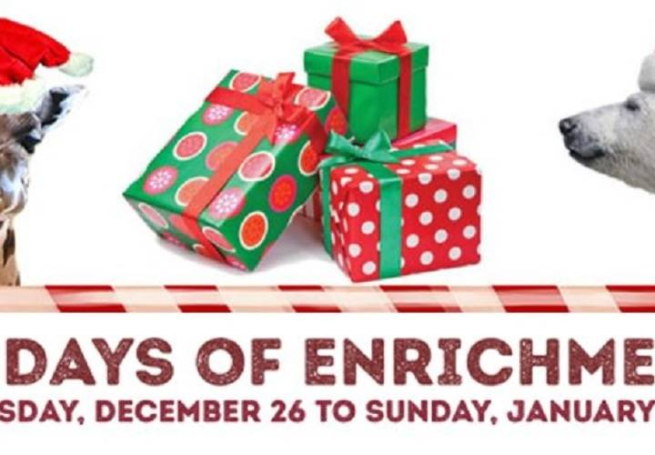 12 days of enrichment toronto zoo