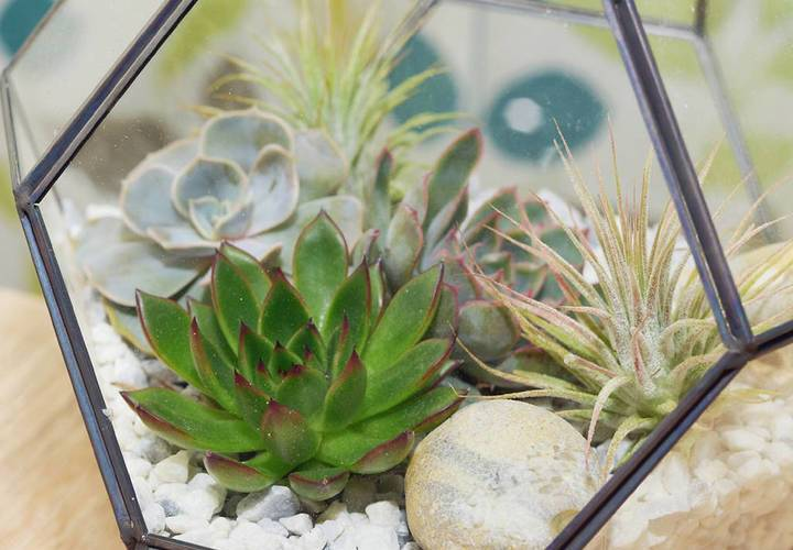 Original air plant succulent and cacti mixed terrarium
