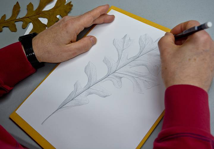 Leaf drawing w alan li   nov 24 2018   alan li  8