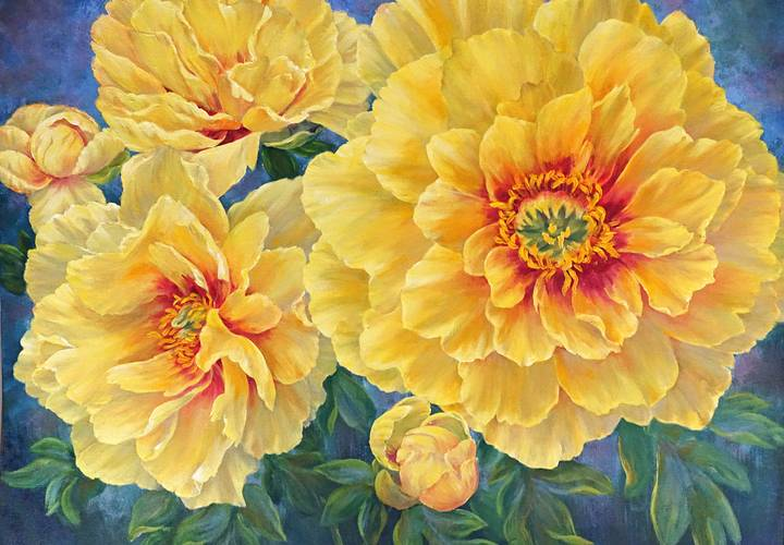 Mbroome 2020 yellow peonies